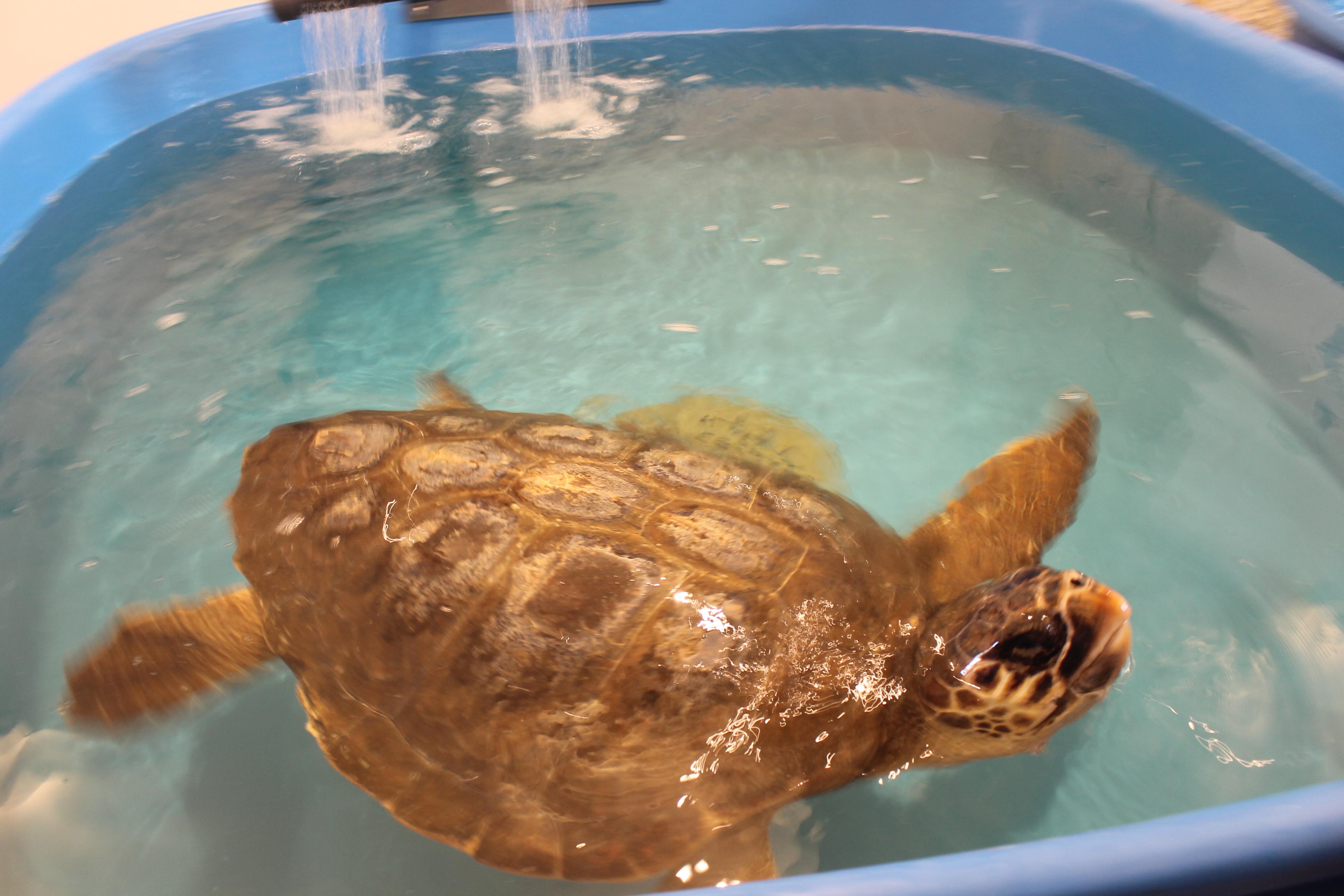 centro di salvataggio tartarughe dell'area marina protetta