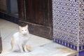 Un viaggio a Marrakech - consigli pratici