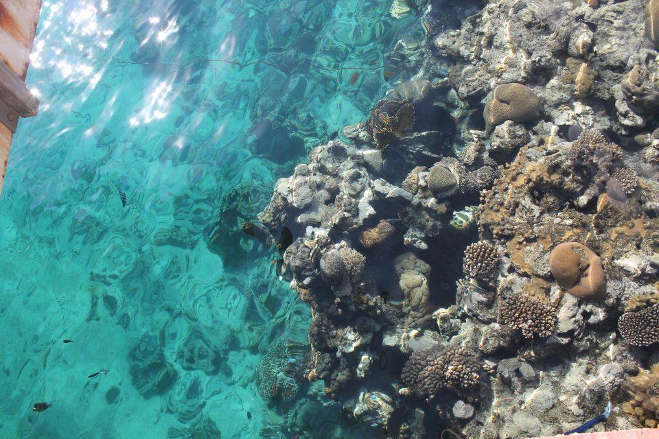 Coral Reef, Eilat