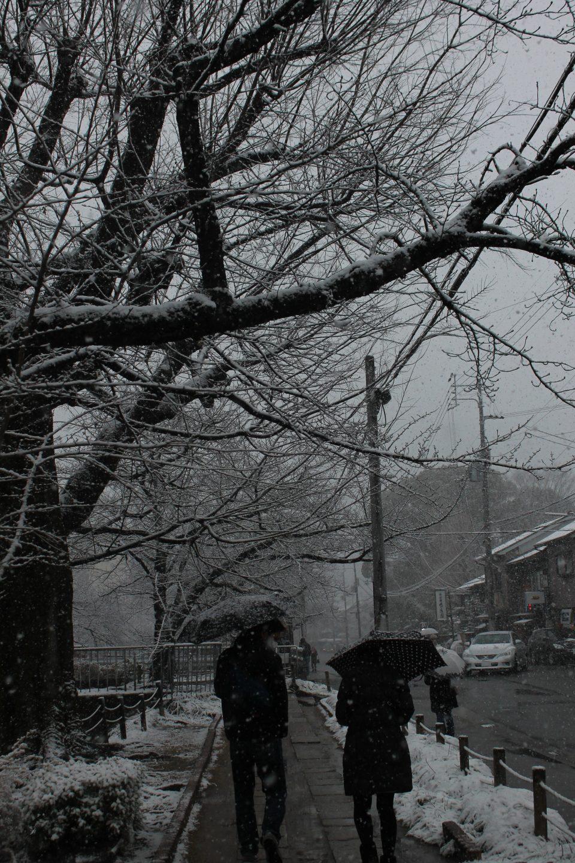 Sentiero del filosofo Kyoto