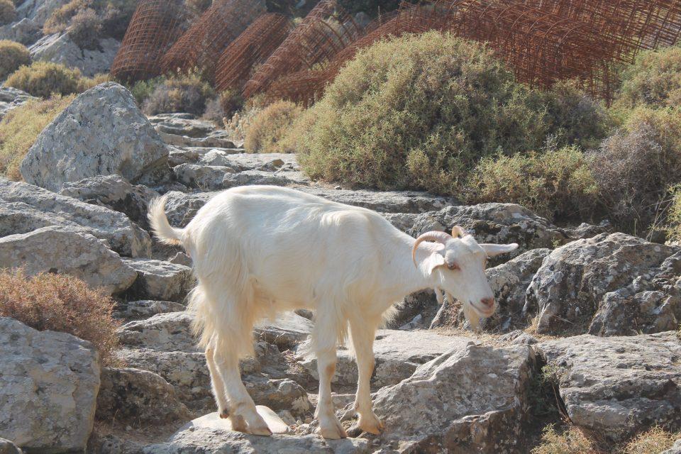 Trekking a Naxos @posh_backpackers