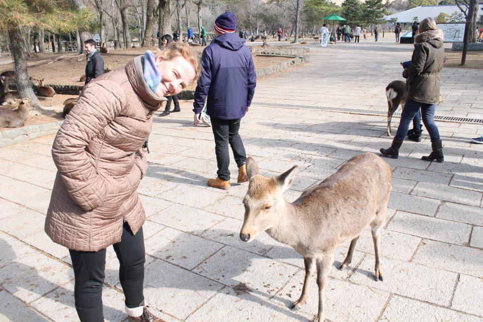 Cervi di Nara
