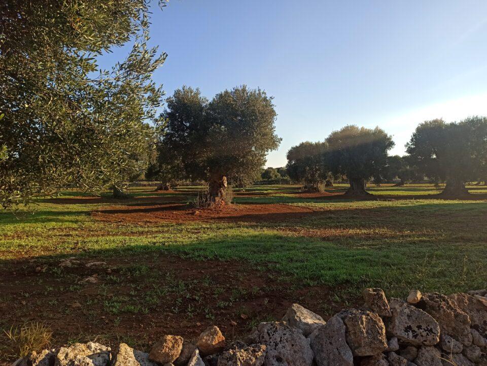 Cosa vedere in Puglia Valle d'itria